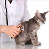 Ветеринарные клиники в Муравленко